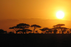 African Sunsets, Sand & Safari Tours