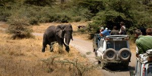 Elephant near a jeep in Tanzania