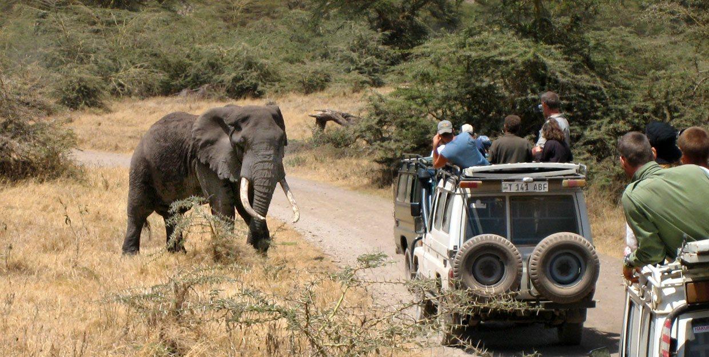 Elephant Encounter width=