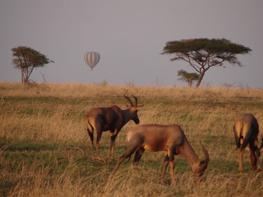 Hot air ballooning over the Serengeti _ Tanzania , Kenya