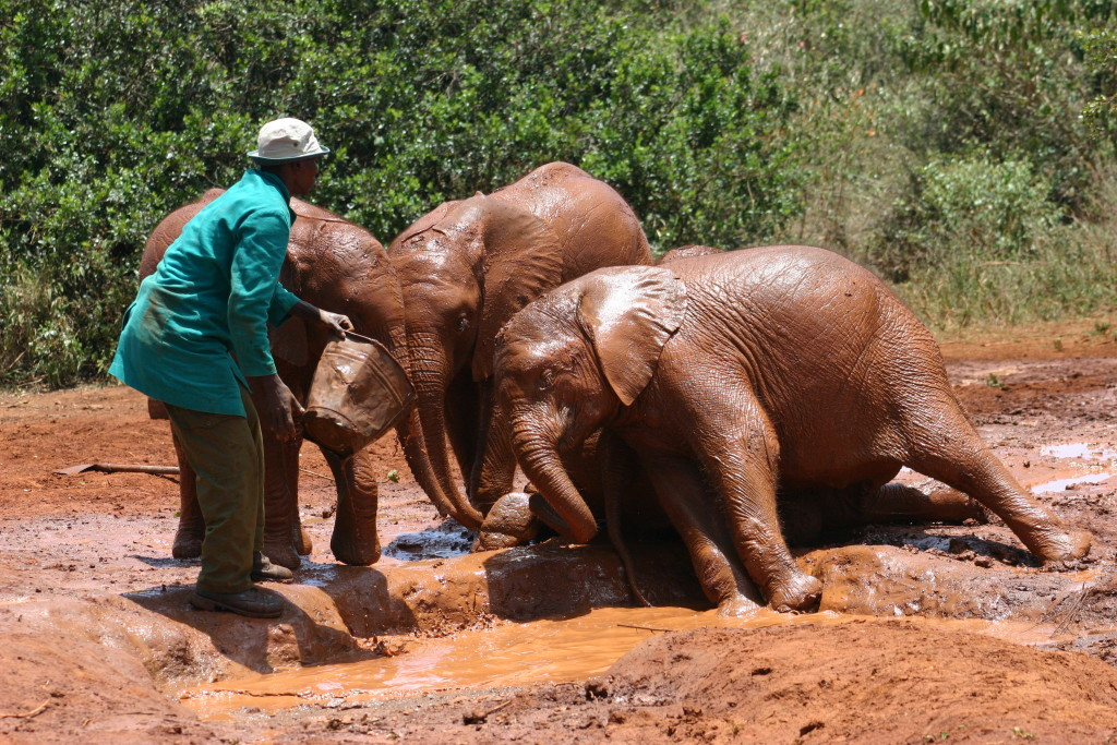 Visit the Sheldrick Elephant Orphanage in Nairobi - Kenya